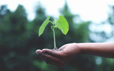 Les plantes : entre théorie, pratiques et reliance